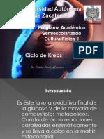 ciclodekrebs2013-130219125759-phpapp02