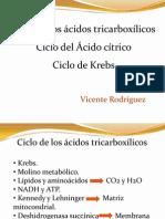ciclodekrebs-110803005511-phpapp02