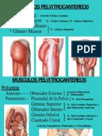 Musculos Del Miembro Inferior