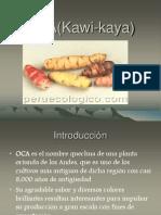 OCA(Kawi Kaya)