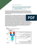 los  anticuerpos quiméricos inmuno