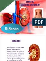 EXPOSICION 3-4 Sistema Urinario Riñones