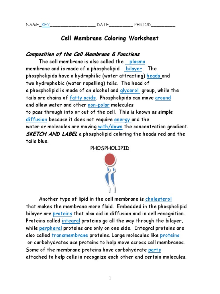 Cell Membrane Coloring Worksheet Answers - cell membrane coloring ...