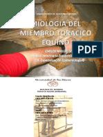 DISECCION ANATOMICA DE MIEMBRO ANTERIOR DEL EQUINO (MUSCULOS PROXIMALES) CMSSEJIN Y CJ SEJIN, Mai Equino 19 11 2011