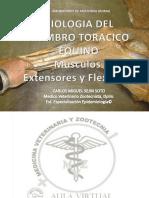 DISECCION ANATOMICA DE MIEMBRO ANTERIOR DEL EQUINO (MUSCULOS EXTENSORES Y FLEXORES) CMSEJINS MVZ Esp (C) Y  CJSEJINP MVZ Esp,