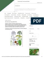 Gardening Guides_ All About Growing Asafoetida