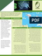 Papua Deforestation Brochure