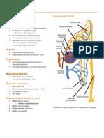 Homeostasis y Osmorregulación - resumen