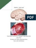 Anatomy - Sistem Saraf