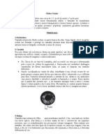 1 - Anatomia Ocular