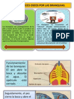 Diapositiva de Pescado Eyder