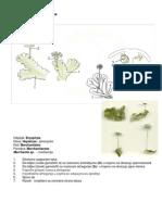 Sistematika bilja
