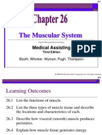 Muscular System.ppt2