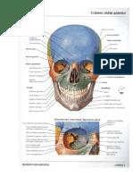 Neuroanatomia Prueba