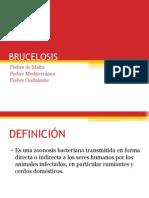 Brucelosis 2 p Entrega (1)