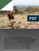 Medicina Preventiva en Equinos