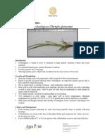 Grass Series Orchardgrass