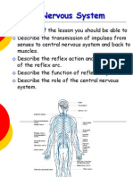 Neurons Types