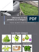 Liberación de Hongos Micoparásitos en el Orégano Orgánico