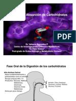 Metabolismo de Carbohidratos Completo