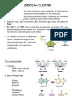 Tema 1 Acidos Nucleicos