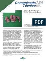 Cultivo de Gengibre em Região Litorânea do Ceará-Cot_184