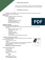 Note de Curs - 4 Alv Br Int Cav Tm