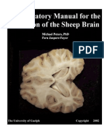 Lab Manual Sheep BrainWithDefinitions