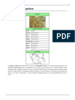 Quinua- Chenopodium Quinoa