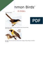 Common Birds