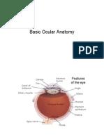 l 01 Ocular Anatomy
