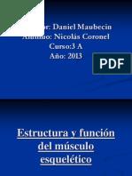 Estructura_y_función_del_musculo_esquelético