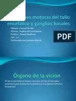 Funciones motoras del tallo encef+ílico y ganglios basales