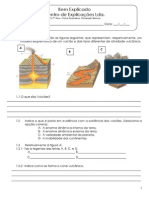 B - 3.1 - Ficha Formativa - Actividade Vulcânica (4).pdf