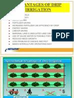 Drip Irrigation Benefits