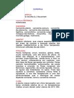 Camomila - Chamomilla recutita [L.] Rauschert - Ervas Medicinais – Ficha Completa Ilustrada
