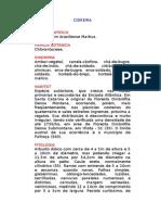 Cidreira - Hedyosmum brasiliense Martius. - Ervas Medicinais – Ficha Completa Ilustrada
