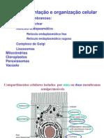 2012-2013 Turma 3 Sistema Endomembranoso
