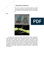 Morfologia das Cactáceas