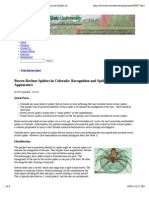 Brown Recluse Spiders in Colorado
