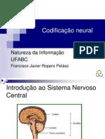 Aula Natureza informação codif neural 22, 24 e 29 de Novembro