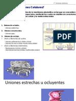 Uniones Ocluyentes