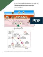 Mecanismos de Agresso e Defesa Nas Parasitoses 2