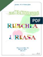 Balan Vica Proiect Ridichea
