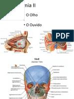 Anatomia II - Olho e Ouvido