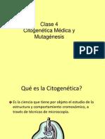 Citogenetica Medica y Mutagenesis