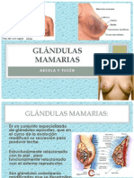Glándulas mamarias presentacion