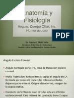 Fisiopatologia Glaucoma