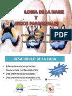 Embriologia de La Nariz. Expo Oto