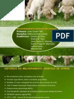 Slide - Trabalho Melhoramento Animal - Ovinos PRONTO